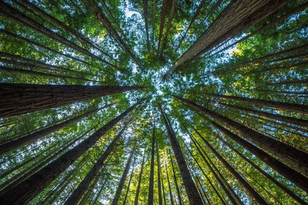 Coupe des arbres et GES: mise au
