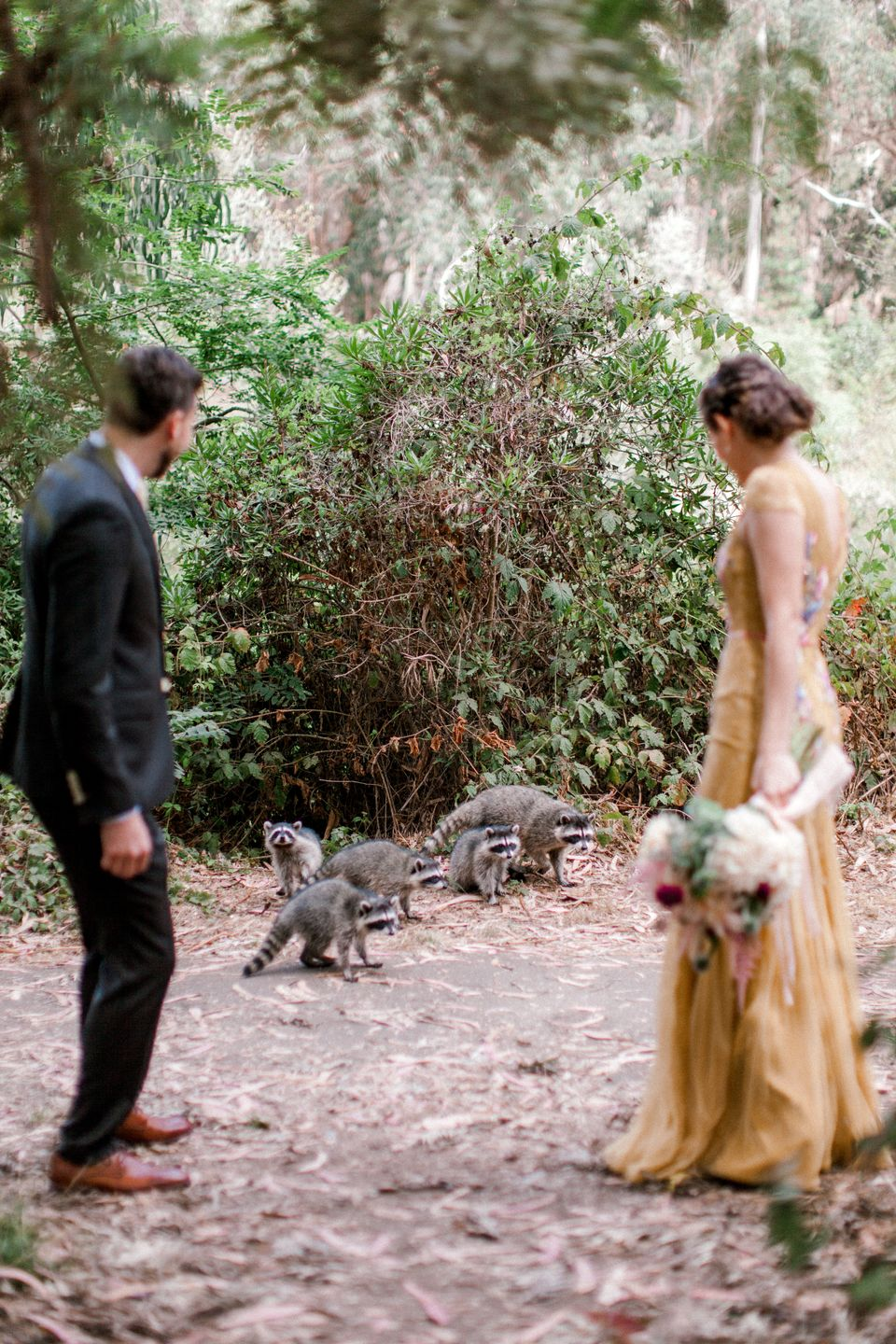 A Gang Of Raccoons Crashed This Bride And Groom's Wedding Photos