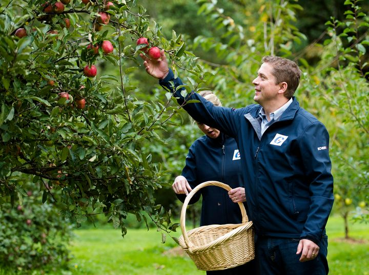 Conservative Leader Andrew Scheer and his wife Jill pick apples at the Triple Creek Farm during a campaign stop in Maple Ridge, B.C., on Friday, September 27, 2019.