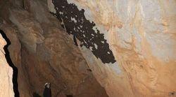 Ανακαλύφθηκε η μεγαλύτερη αποικία νυχτερίδων στην