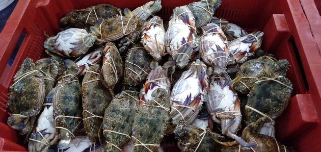 Photos de crabes