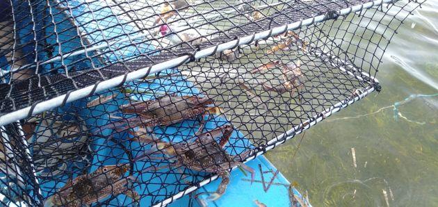 Photo de la Nasse utilisée pour la pêche aux crabes