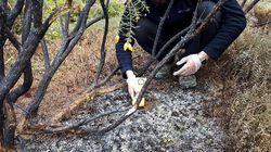 Χιλή: Μυστήριο με πύρινες μπάλες που έπεσαν στη Γη (και δεν είναι