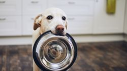 3 Signs It's Time To Change Your Pet's