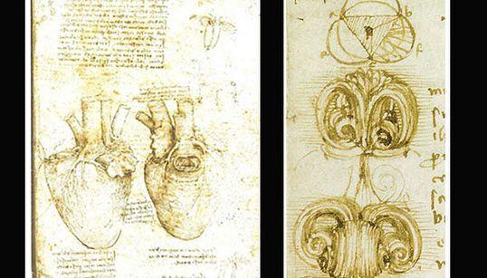 Leonardo grande anatomista, l'intuizione sui vortici nel nostro cuore (di M.