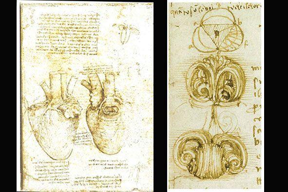 Figura 1. Sulla sinistra la faccia anteriore con l'aorta in evidenza, e a lato la faccia posteriore....