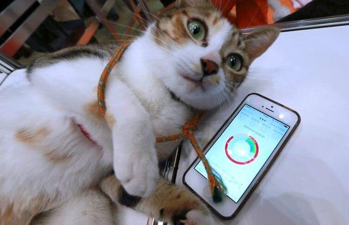 "<i>Una aplicaci&oacute;n para tel&eacute;fonos inteligentes, desarrollada por la empresa japonesa Anicall, pretende mostrar los &lsquo;sentimientos&rsquo; de un gato. Puede que alg&uacute;n d&iacute;a las aplicaciones traduzcan las expresiones animales a emociones.&nbsp;<a href=""http://www.cpimages.com/fotoweb/cpimages_details.pop.fwx?position=138&amp;archiveType=ImageFolder&amp;sorting=ModifiedTimeAsc&amp;search=cat&amp;fileId=7ED4E565C8CEED276553137C3F07278F0211563F5E7047DF3AAB663AE59BB0CF1642B0B80D34257E6710EC2568FB7698B59B4D70A14C35A5085499F7776FCE74F2B7765E8750034730859FC82D50AED9FE59D2970D2E169702AF0483B6B5EB6C42F841C1FF39A6F82A1B1FF576DC98DFDFA8B4906E2B2637CA6ABE2F54441DF0E41DB96B4682A54674266B70D538C8384B7097AA1ED5BA40"" rel=""nofollow"" data-ylk=""subsec:paragraph;itc:0;cpos:39;pos:2;elm:context_link"" data-rapid_p=""16"" data-v9y=""1"">(AP Photo/Eugene Hoshiko)</a></i>"