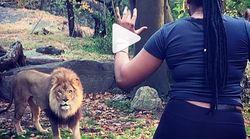 Βίντεο: Μπήκε μέσα στα λιοντάρια σε ζωολογικό κήπο και εκείνα δεν ήξεραν πως να το