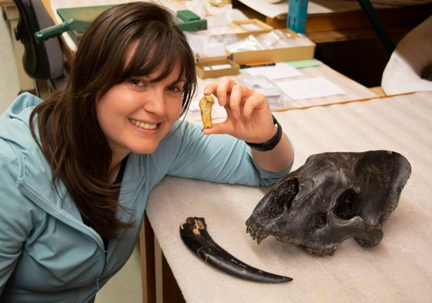 Ashley Reynolds holds the Smilodon fatalis metacarpal from Medicine Hat, Alta., in this image provided...