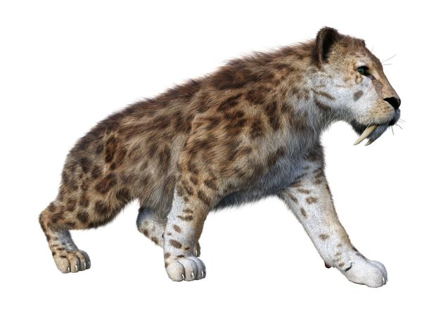 This is a 3D illustration of what a sabre-toothed cat would've looked
