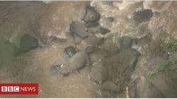 Θλίψη: 6 ελεφαντάκια σκοτώθηκαν πέφτοντας από καταρράκτη προσπαθώντας να σώσουν το ένα το