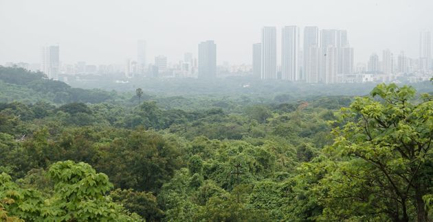 Aarey Forest:HC Refuses Stay On Felling Of