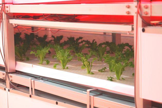 場内に構える「植物工場」の様子。完全無菌室でコンピューター制御しながら、野菜の育成状況を細かくチェックしている