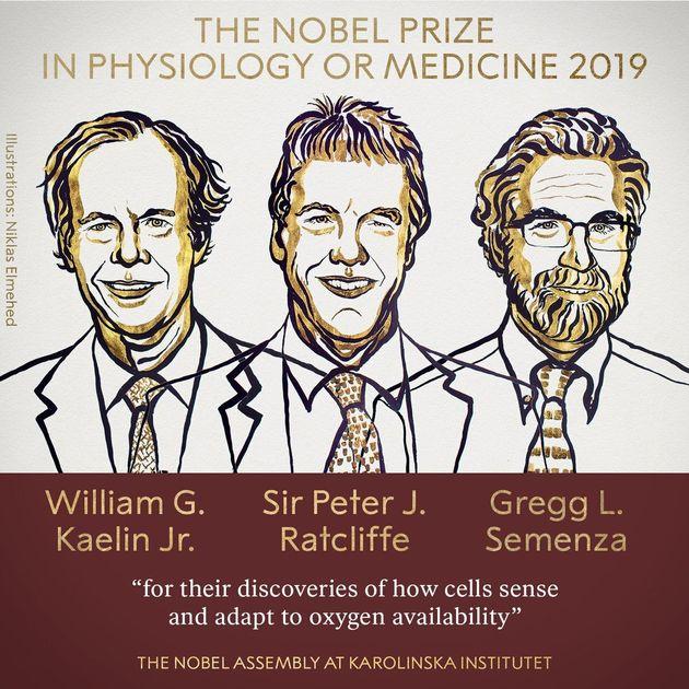 William G. Kaelin et Peter J. Ratcliffe et Gregg L. Semenza ont reçu le prix Nobel de médecine