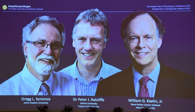 The winners of the 2019 Nobel Prize in Physiology or Medicine (L-R) Gregg Semenza of the US, Peter Ratcliffe...