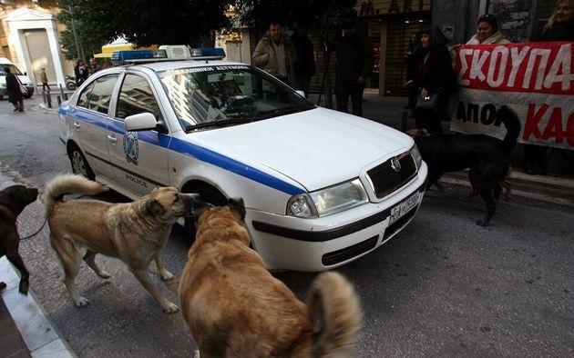 Ληστής τραυμάτισε σοβαρά δύο σκυλιά για να κλέψει μία