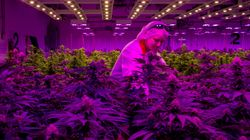 Ontario, Quebec Cannabis Retail 'Nightmare' Threatens Industry: