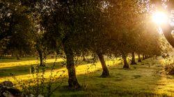 Tra gli ulivi e il sangue, la Puglia che non vuole