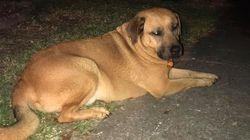 ΗΠΑ: Σκύλος έσωσε τον ιδιοκτήτη του από πυρκαγιά ξυπνώντας τον με τη μύτη