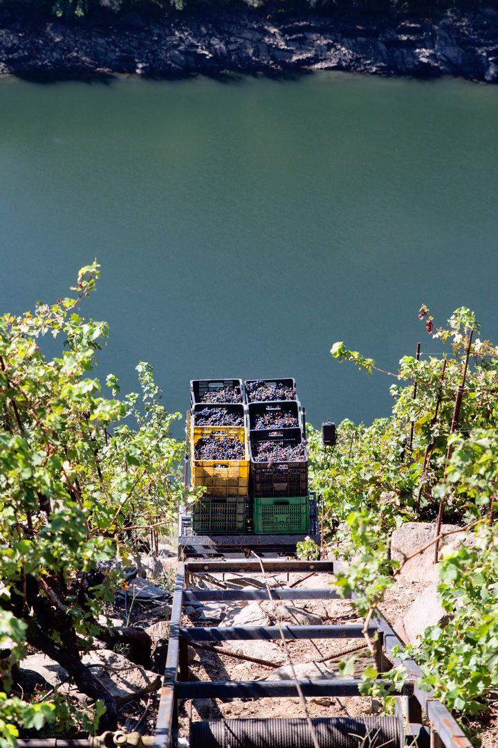 Raíles para subir la uva vendimiada por la pendiente de la ladera.