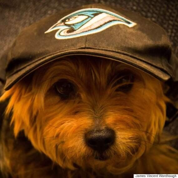 These Pets Are On The Blue Jays Bandwagon, And It Feels So