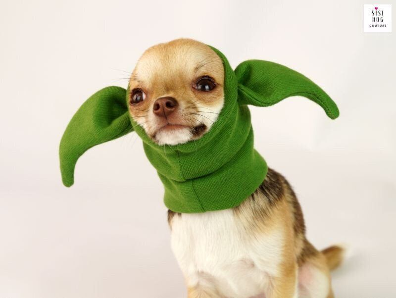 20 Pawsitively Funny Halloween Costumes For Dogs Of All
