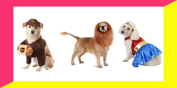 We've rounded up 20 Halloween costumes that will fit dogs of all sizes, from tiny Terriers to Great Danes.