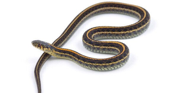 Jordan Cook was sentenced for throwing a gartner snake across the counter of a Tim Hortons in