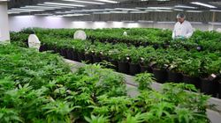 Canada's First Publicly Traded Weed Company Finally Turns A