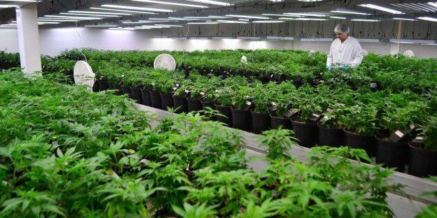 A grow room at Tweed's marijuana facility in Smiths Falls, Ont. Tweed Marijuana Inc. is reporting its...