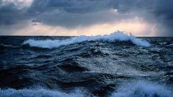 Ocean Blob Brings Tropical Fish To B.C.