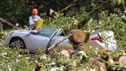 B.C. Windstorm Cuts Power, Knocks Trees Into