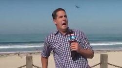 Big Bug Interrupts News Anchor At The