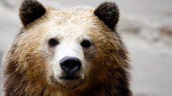 Alberta Wilderness Area Closes After Grizzly Bear