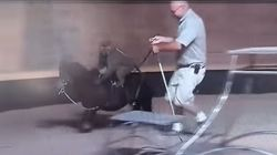 Zoo Owner Calls Pony-Riding Baboon A 'C**ksucker' On Live