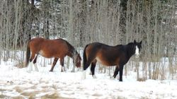 Wild Horse Group Only Able To Save So