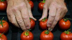 Έρευνα: Οι ντομάτες κάνουν καλό στο σπέρμα και τη