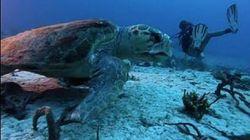La sub si immerge nei fondali e ha un incontro faccia a faccia con una tartaruga gigante