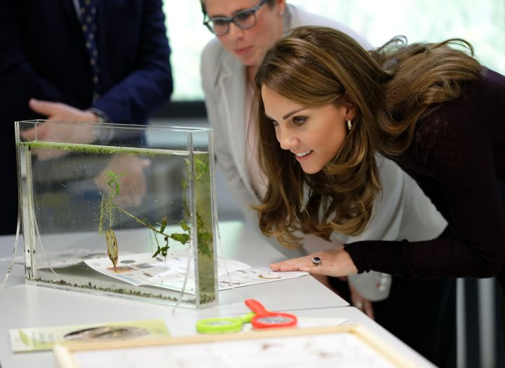 Kate is a patron of the Natural History Museum.