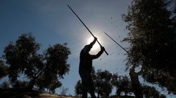 El olivar sale a calle para defenderse de los aranceles de