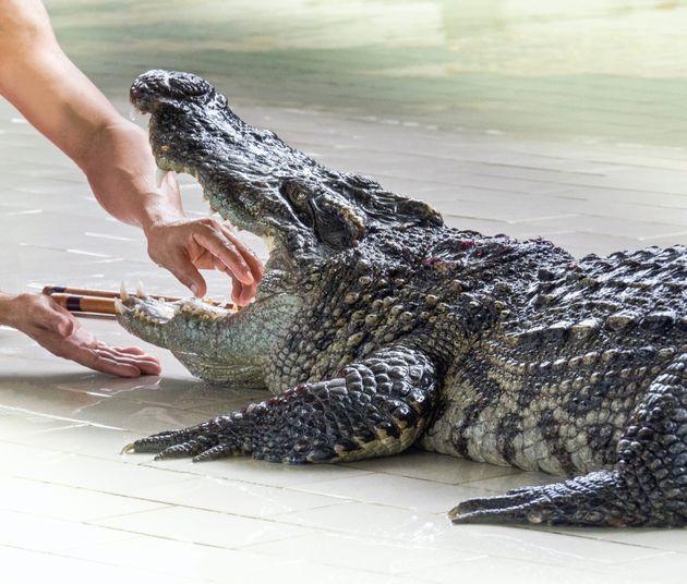 Οσκαρ ανοησίας: Ανάγκασε αλιγάτορα να τον δαγκώσει και μετά του έδωσε