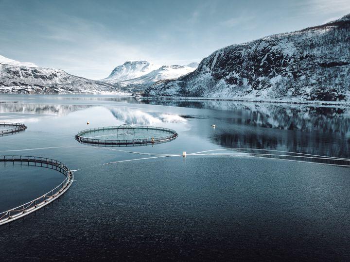 Allevamenti norvegesi