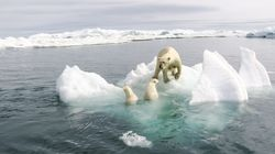Aquecimento global gera danos 'catastróficos e irreversíveis' à economia e ao mundo, diz