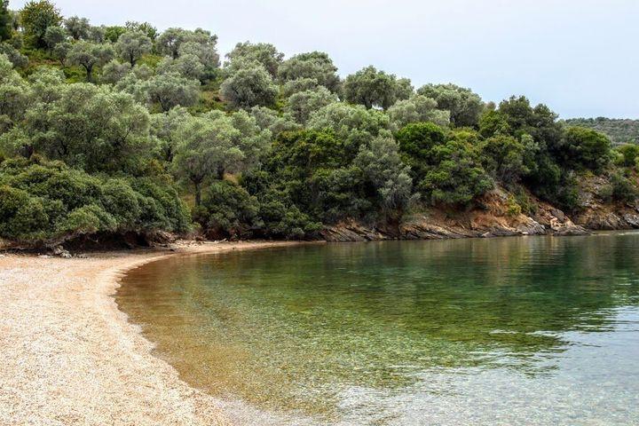 Τα γκριζοπράσινα χωράφια με ελιές που κατεβαίνουν μέχρι κάτω στη θάλασσα είναι ένα από τα πιο χαρακτηριστικά τοπία του Πηλίου