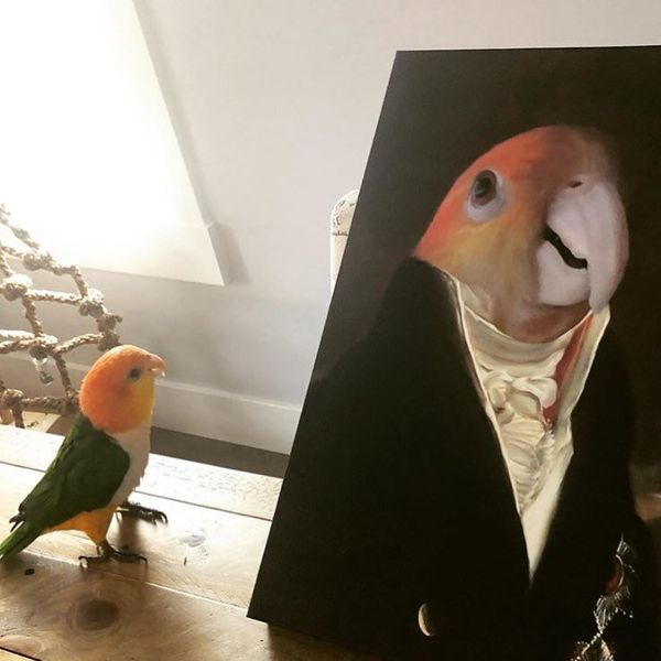 Your grandma's parrot is a lot more regal than a mere iPhone pic can ever fully convey. Why not take a photo of the bird and