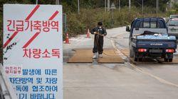 철원·연천 멧돼지 폐사체에서 아프리카돼지열병 '양성' 판정이