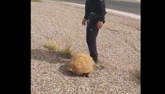 Hallan a una tortuga de más de 25 kilos en una rotonda de Ciudad