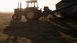 Schiacciato da un macchinario, agricoltore muore al