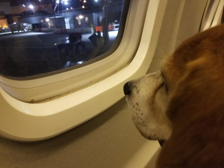 Shiloh looks out a plane window.