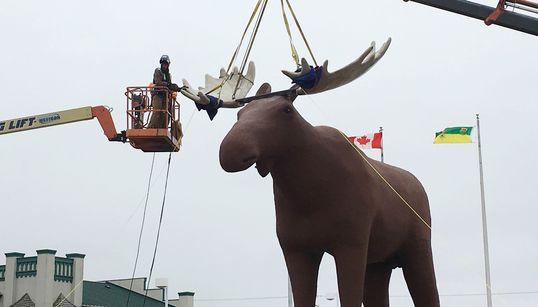 ▶️Beloved Saskatchewan Statue Reclaims 'Tallest Moose'